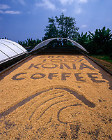 Kona Coffee Beans sun drying naturally on wooden beds with sliding solar roof open, Kailua-Kona, Big Island, Hawaii, USA.