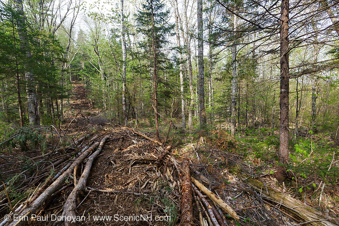 Skidder Road from the Kanc 7 Timber Harvest project in the area of Forest Road 37A along the Kancamagus Scenic Byway (route 112) in the White Mountains, New Hampshire USA