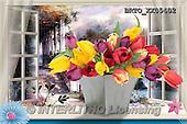 Alfredo, FLOWERS, BLUMEN, FLORES,  photos+++++,BRTOXX05402,#F#