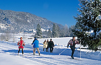 Austria, Tyrol, Kaiserwinkl: Winter Scenery, winter hiking-trail and cross-country ski run near Walchsee at Zahmer Kaiser Mountain