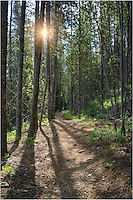 On an early morning hike, I stopped to take this image of what a cool summer morning in Colorado looks like. The shadows were still long from the tall pine trees, and the sun was rising through the forest canopy. All along my 5 mile walk, I never saw another person. Quiet. Peaceful. Rocky Mountains. Colorado.