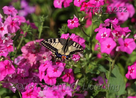 Gisela, FLOWERS, photos(DTGK1252,#F#) Blumen, flores, retrato