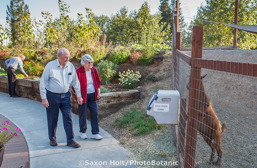 Elderly residents of Healdsburg Senior Living Center feeding goats