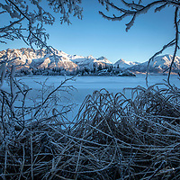 Winter landscape of hoarfrost on trees and grasses along Knik River on a sunny day in the Matanuska Valley near Palmer, Alaska.  Chugach Mountains  Southcentral Alaska<br /> <br /> Photo by Jeff Schultz/SchultzPhoto.com  (C) 2019  ALL RIGHTS RESERVED
