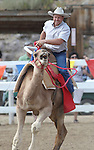 Shane Harrington races in the International Camel Races in Virginia City, Nev., on Friday, Sept. 9, 2011. .Photo by Cathleen Allison