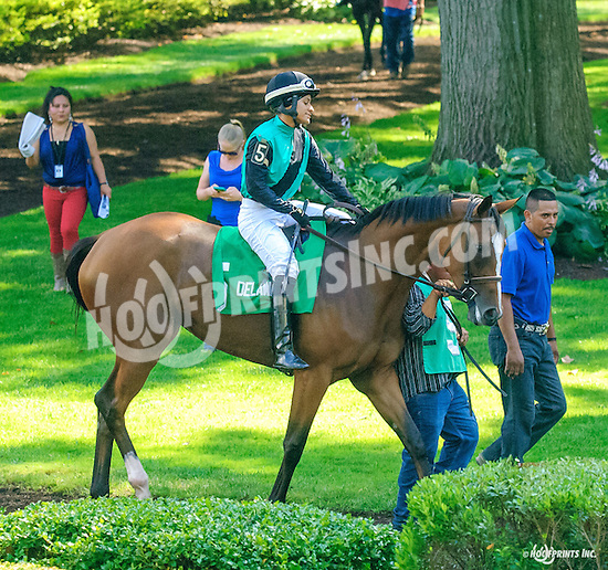 Strong Gale before The Christiana Stakes at Delaware Park on 7/6/16