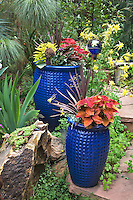 Some cobalt blue pots loaded with coleus, phormium and sweet potato vines make a colorful addition to Dan Johnson's Denver garden.