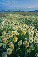 Munz's tidy tips<br />