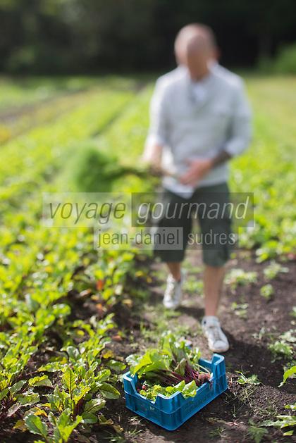 Europe/Belgique/Flandre/Flandre Occidentale/Bruges: Achim Vandenbussche , chef du restaurant :  Den Dyver choisit ses légumes et herbes aromatiques chez Loca Labora - Agriculture biologique