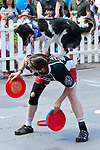 Frisbee or disc dogs combine an amazing amount of intelligence, athleticism, discipline, and training into one sport. Here the handler and dog have to be a perfect working unit in performing an intricately choreographed two-minute routine. Washington, USA