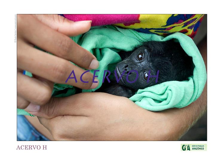 Cristina Viana Barbosa, 17 anos, ganhou de sua avó o filhote recem nascido de macaco guariba encontrado no quintal de casa ao lado da mãe baleada por caçadores e o cria como bebê.<br /> <br /> <br /> Criado o primeiro  protocolo comunitario na Amazônia estabelecendo relações comerciais com base nas leis ambientais de acordo a convencao da diversidade biologica, (A Convenção sobre Diversidade Biológica (CDB) é um tratado da Organização das Nações Unidas e um dos mais importantes instrumentos internacionais relacionados ao meio ambiente) . e o  protocolo de Nagoya ratificado em  2010.<br /> <br /> <br /> <br /> Articulado pelo  Grupo do Trabalho Amazônico – Rede GTA,   em parceria com a Regional GTA/Amapá,  Conselho Comunitário do Bailique, Colônia de Pescadores Z-5, IEF,  CGEN/DPG/SBF/MMA,   lideranças comunitárias se reuniram com representantes  do Ministério do Meio Ambiente, Ministério Público Federal, Embrapa e Conab para para debater os caminhos a seguir pondo em prática o o primeiro protocolo comunitário criado na Amazônia. O  chamado de III Encontrão,  aconteceu durante os dias 26, 27 e 28 de fevereiro na comunidade de São João Batista no arquipélago do Bailique  reunindo 78 lideranças  de 25 comunidades<br /> Amapá, Brasil.<br /> Foto Paulo Santos de <br /> 24/02 a 01/03 2015
