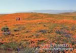 FB-S136,  Antelope Valley Calif. Poppy Reserve