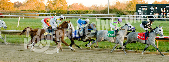 Rich Frynchman winning The Delaware Park Arabian Classic Handicap on 11/5/11