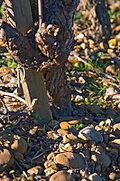 Chateau Rives-Blanques. Limoux. Languedoc. Old Mauzac grape vine variety. Terroir soil. France. Europe. Vineyard.