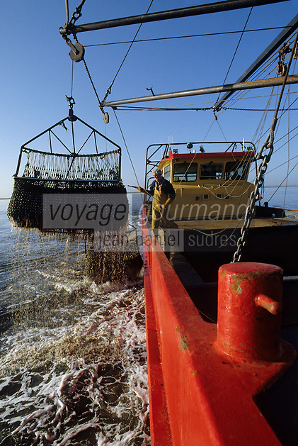 Europe/Pays-Bas/Hollande/Yerseke : Le port myticole de Yerseke - Dragues servant à remonter les moules