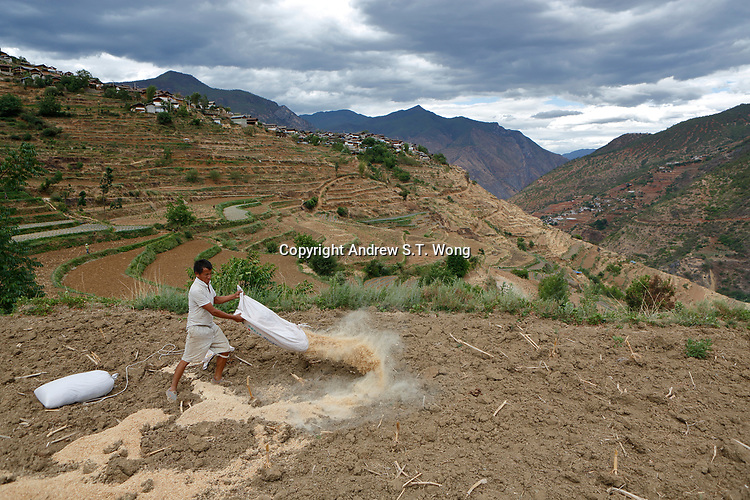 Wumu Village, Yulong County, Yunnan Province, China - Dongba priest He Jixian of the Naxi ethnic group spreads fertiliser over his field, June 2019.