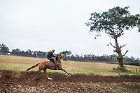 A horse pulled his jockey on the small gallops at Ngong Racecourse. The small gallops are used to settle difficult horses before they move to the main gallops. Nairobi, Kenya. March 13, 2013. Photo: Brendan Bannon