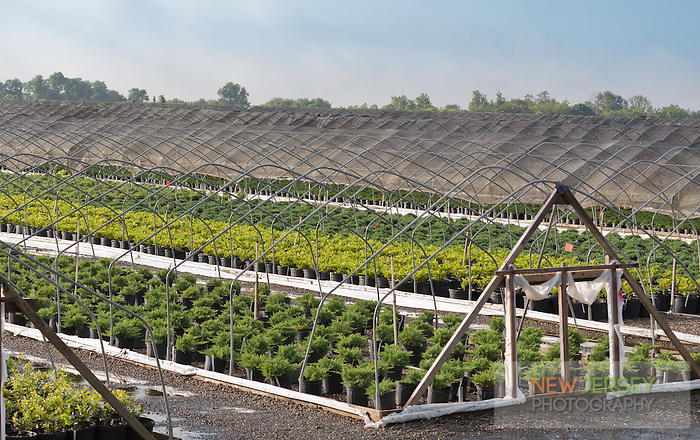 Protective covering has been removed from commercial greenhouses to expose rows of potted plants