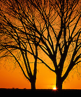 Trees silhouetted during winter sunrise, Louisville, Kentucky