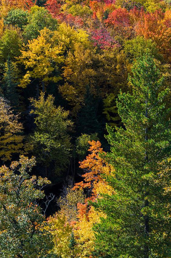 Fall color along the Dead River near Negaunee and Marquette, Michigan on Michigan's Upper Peninsula.
