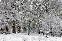 Children toboggan down snow-covered Hampstead Heath, North London, United Kingdom