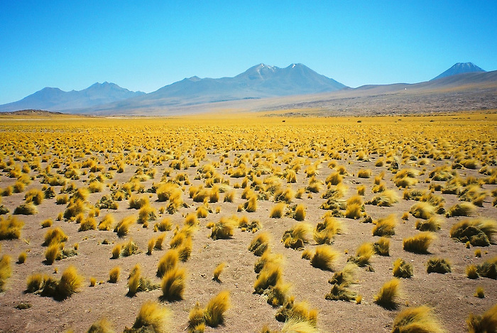 Desierto de Atacama / Chile.<br /> <br /> Atacama desert / Chile.