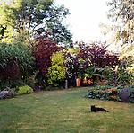 cat lying in grass in a garden