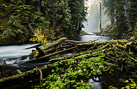 McKenzie River and Forest