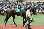 Daimei Princess, AUGUST 19, 2018 - Horse Racing : Daimei Princess is led through the paddock before the TV Nishinippon Corp.Sho Kitakyushu Kinen at Kokura Racecourse in Fukuoka, Japan. (Photo by Eiichi Yamane/AFLO)