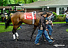 Crazy About Me before The Dashing Beauty Stakes at Delaware Park racetrack on 6/12/14