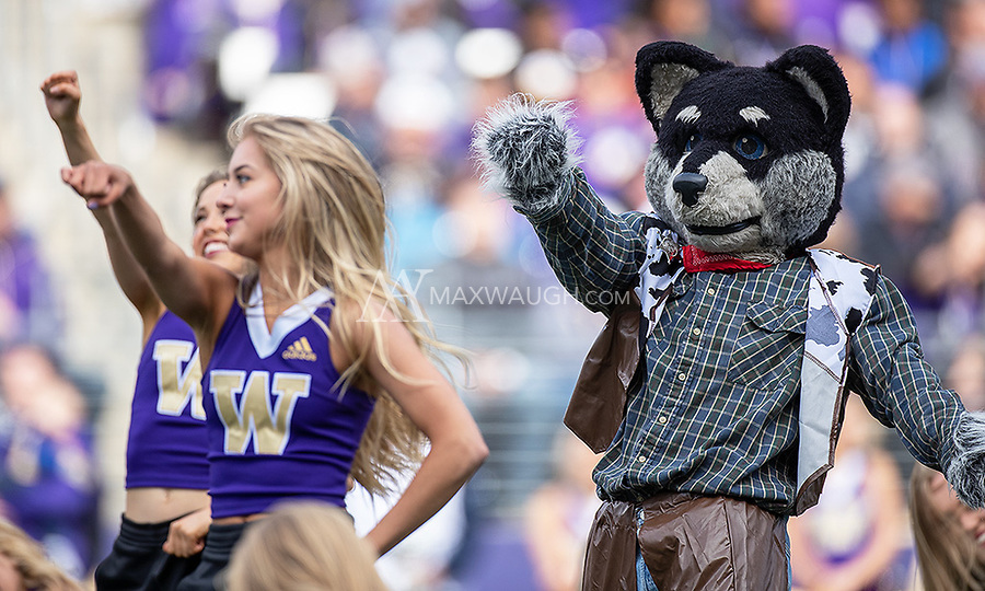 Harry the Husky performs with the Husky Dance Squad.