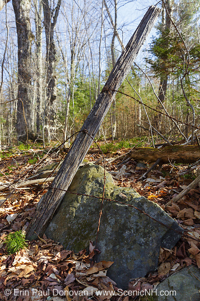 Remnants of an old barbed wire fence along a stone wall in an abandoned 1800s hill farming community along old South Landaff Road in Landaff, New Hampshire USA.