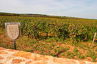 Vineyard. Les Petits Epenots, Hospices de Beaune. Pommard, Cote de Beaune, d'Or, Burgundy, France