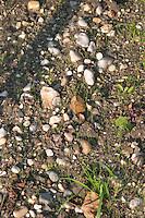 Soil detail. Stony. Sand. Chateau Cantenac Brown, Margaux, Medoc, Bordeaux, France
