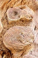 Petrified Tree at Deadvlei, Namibia