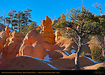 Bryce Canyon Landscapes