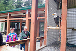 Alaska, Sitka..Alaska Raptor Center, rehabilitating injured birds.  Various birds on display..Photo copyright Lee Foster, 510/549-2202, lee@fostertravel.com, www.fostertravel.com..