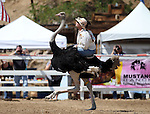 Kristy Bond races in an ostrich race during the 54th International Camel Races in Virginia City, Nev., on Friday, Sept. 6, 2013.  <br /> Photo by Cathleen Allison