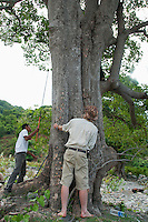 British herpetologist Mark O'Shea and Timorese student Zito Afranio  search for lizards in a tree in the Liquica district of Timor-Leste (East Timor). They are participating in an ongoing survey of Timorese reptiles and amphibians.