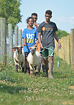 Robel Haile (right), a 13-year old resettled refugee from Ethiopia, and Eldana Teclamariam, a 12-year old resettled refugee from Eritrea, lead a group of youth learning how to show sheep and goats in Linville, Virginia, on July 17, 2017. The youth are preparing to show their animals in a county fair. <br /> <br /> They and other refugees were resettled in the Harrisonburg, Virginia, area by Church World Service. <br /> <br /> Photo by Paul Jeffrey for Church World Service.