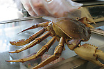 Crab at Fisherman's Wharf