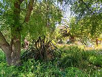 Ximena Garden