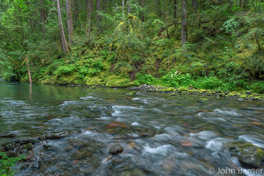 ORCAN_D148 - USA, Oregon, Willamette National Forest, South Fork Breitenbush River and lush old growth forest in spring.