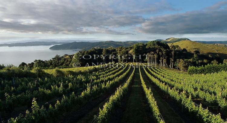 Stoney Batter vineyard. Waiheke Island. Auckland. New Zealand.