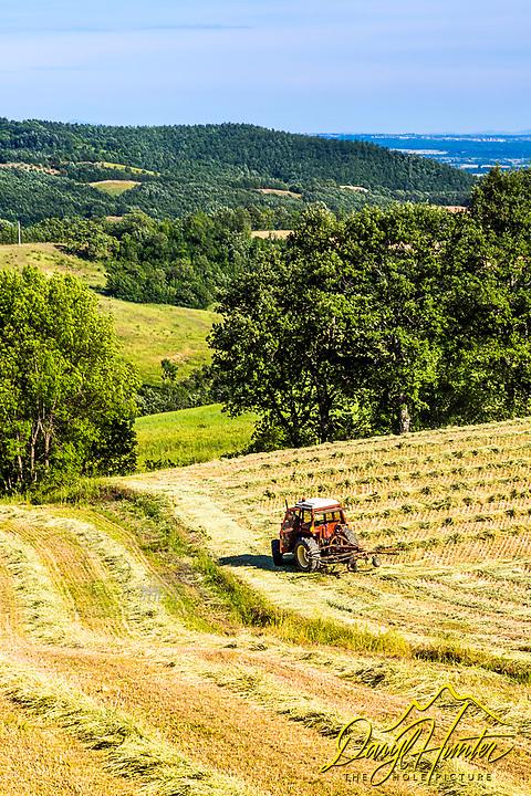 Farming in Tuscany.  a farmer racking hay near Pitigliano Italy in southern Tuscany