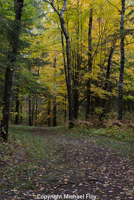 Fall Colors on Hiking Trail in Jay Cooke State Park.