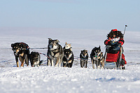 Tuesday March 13, 2007   ----   Lance Mackey, the 2007 Iditarod champion hunkers behind his sled about 8 miles from the Nome finish line.