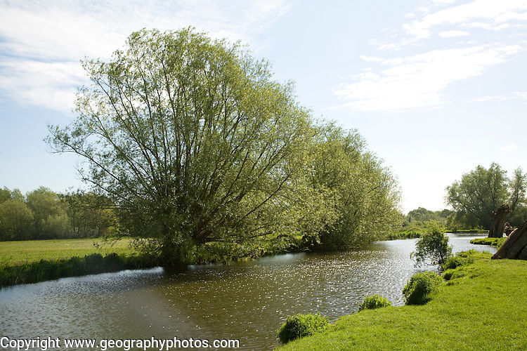 Willow trees line meandering River Stour, Dedham Vale, Essex Suffolk border, England