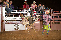 SEBRA - Fredericksburg, VA - 7.25.2014 - Bulls & Action