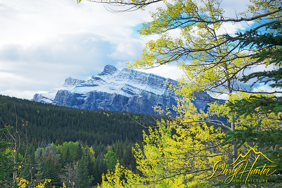 Mt. Rundle and golden aspen in Banff National Park